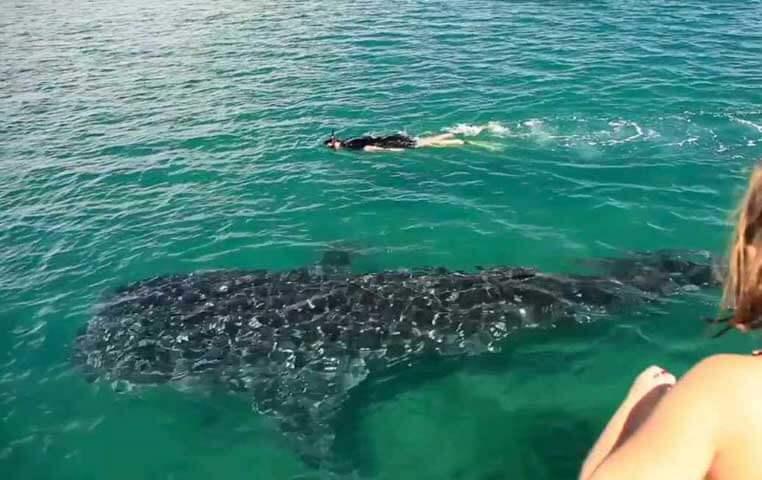 Los Cabos Whale Shark Snorkeling Tour to La paz