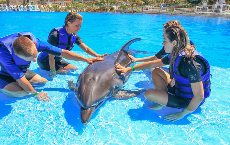 Swim with Dolphins in Cabo
