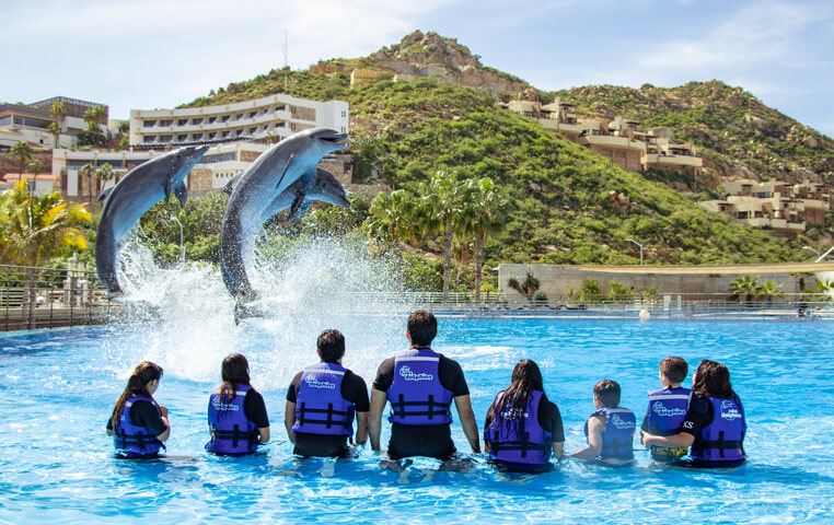 Dolphin Encounter in Cabo San Lucas
