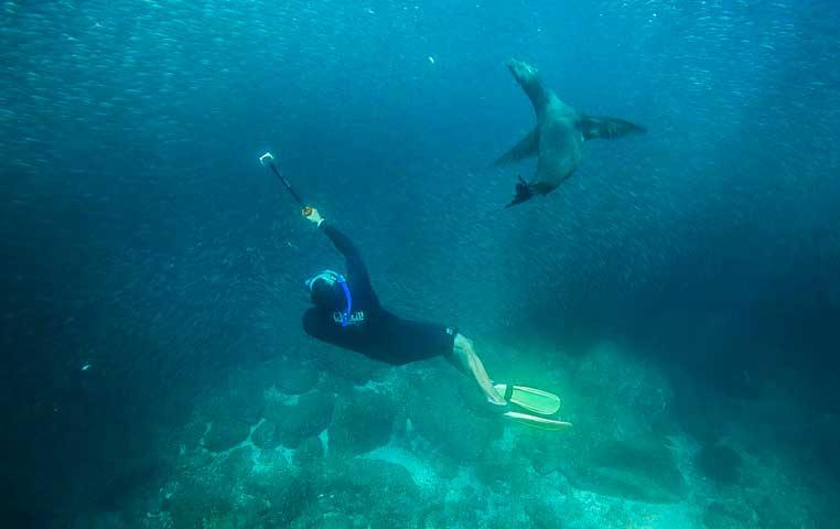 Cabo Snorkeling Sailing