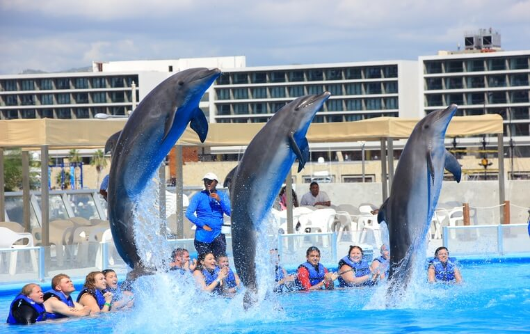 Place to swim with Dolphin in Cabo San Lucas