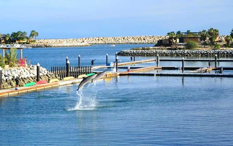 Dolphins Jumping out of the Water in Cabo San Lucas Dolphin Center
