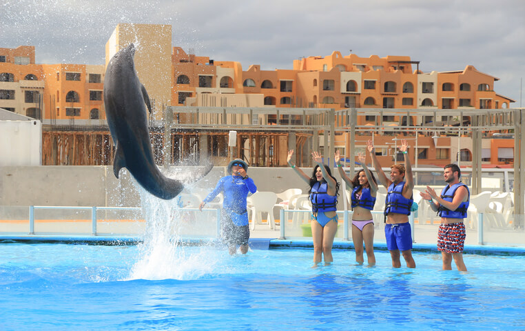 Swimming with Dolphins Cabo San Lucas