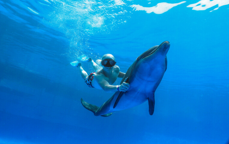 Dolphins in Cabo