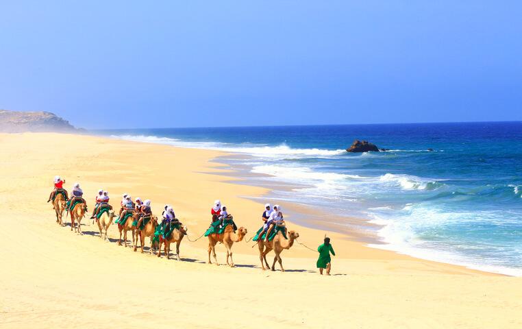 Los Cabos Camel Safari and Ride