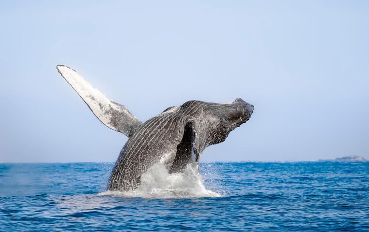 Los Cabos Whale Tour
