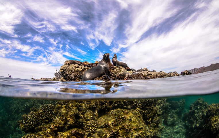 Cabo Pulmo Snorkeling