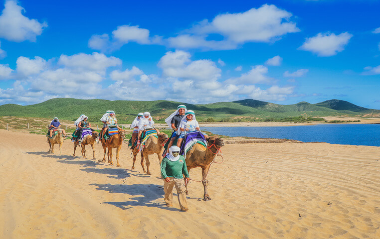 Best Cabo Camel Ride
