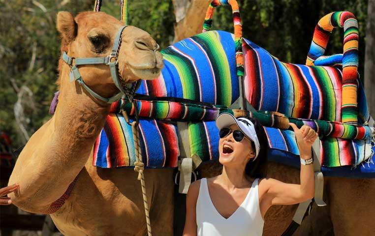 cabo san lucas camel tour
