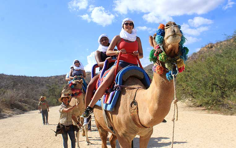 camel safari cabo