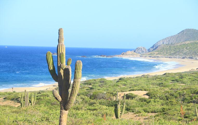 Los Cabos Dune Buggy