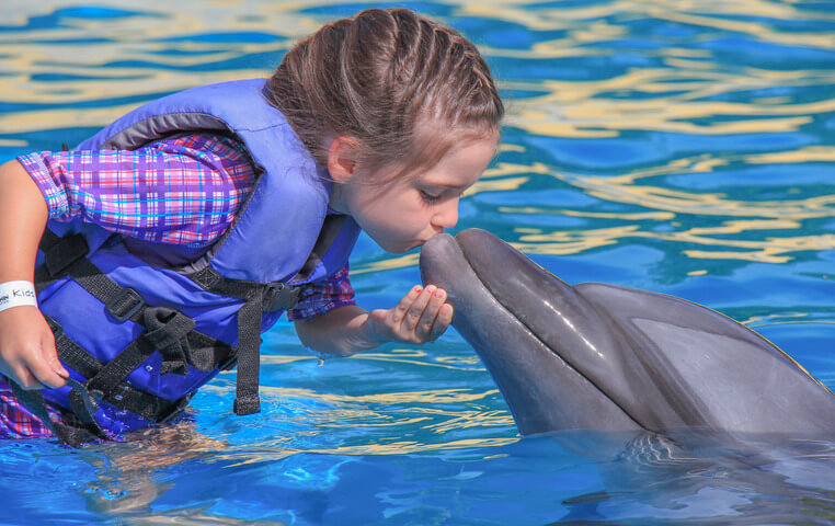 Dolphin for Kids in Cabo