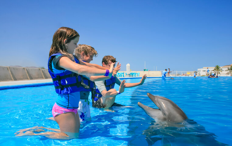Dolphin Swim for Children in Cabo