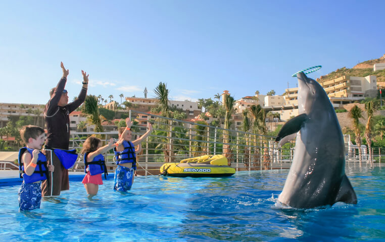 Dolphin Center for Children in Cabo