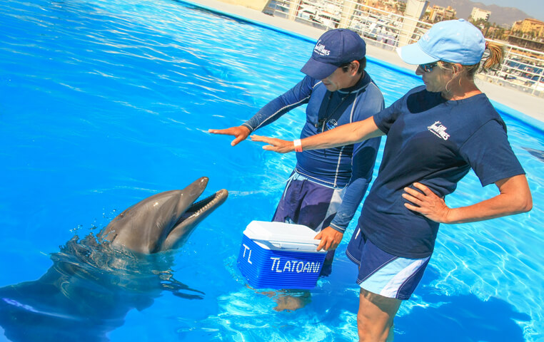 Dolphin Cabo Trainer