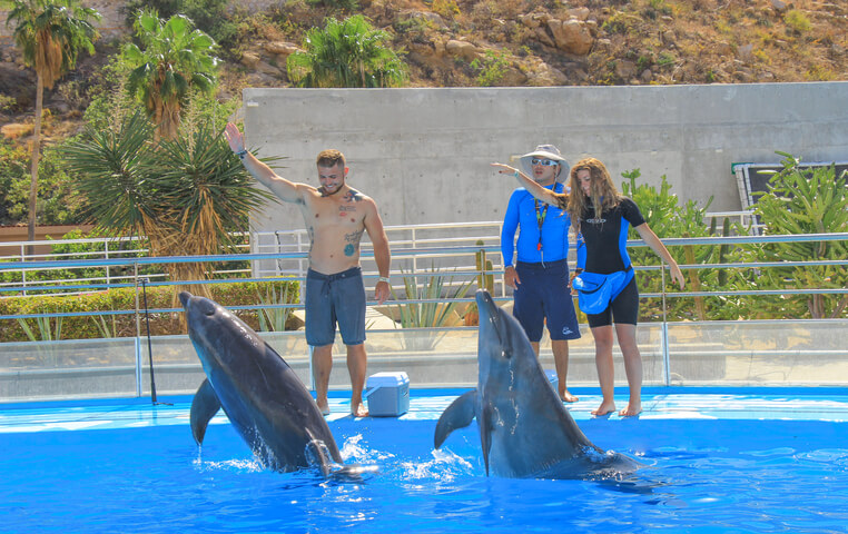 Best Dolphin Tour in Cabo