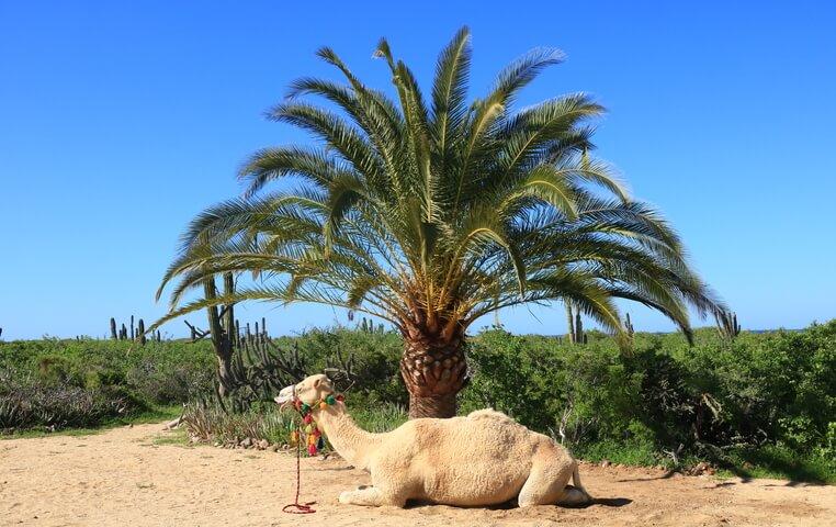 ATV Tour in Cabo